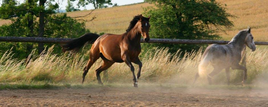 Pferd Reiten München Faszination Pferd   Reiten in